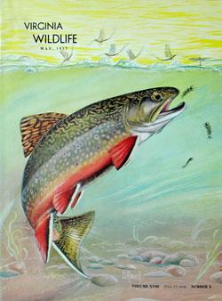 Search Virginia Wildlife Archive