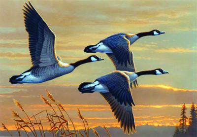 U.S. Fish & Wildlife Service - Migratory Bird Program ...
