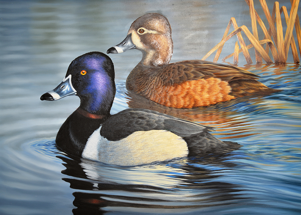 What license or permit do I require to hunt migratory game ...
