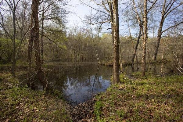[Image: BD-WMA_-wetlands_0003_smaller-600x400.jpg]