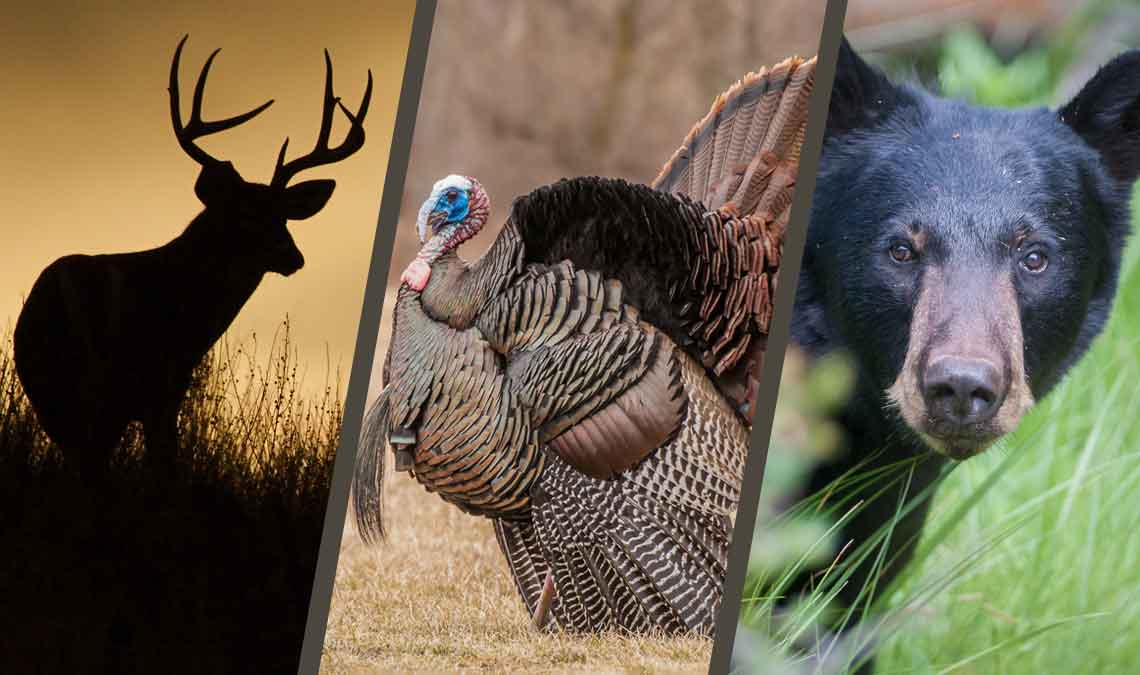 Hunting, Trapping, and Terrestrial Wildlife Proposed Regulations: Review & Comment
