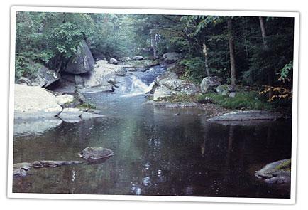 Eastern Hellbender | VDGIF