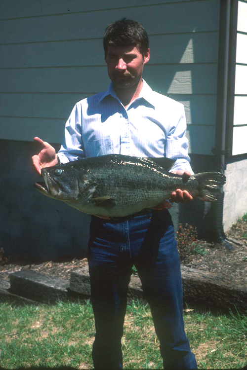 Virginia state record fish vdgif for State record fish