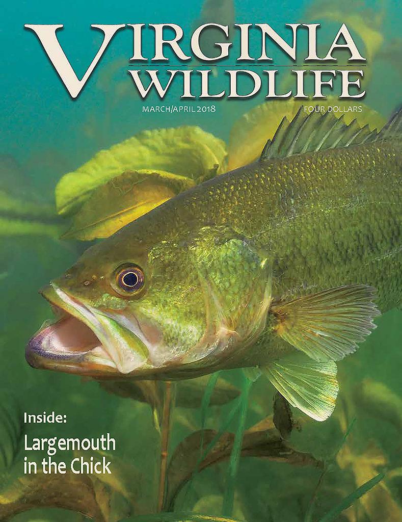 Virginia wildlife magazine vdgif for Virginia fish and game