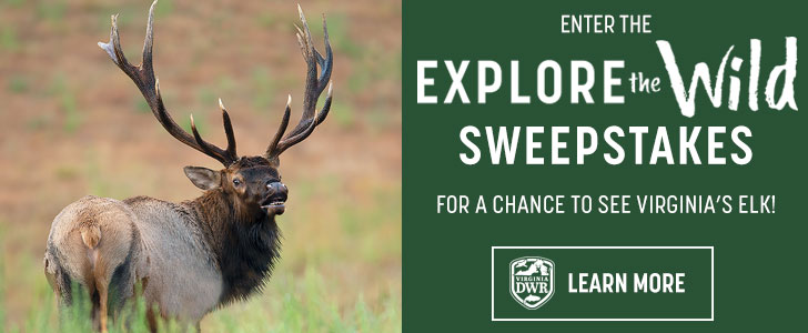 Enter to win a chance to see Virginia's elk!
