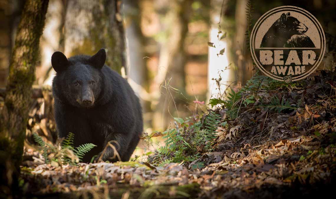 Being Bear Aware
