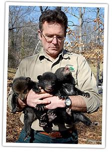 bear-cub-large