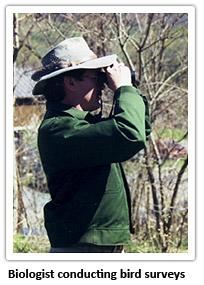 biologist-conducting-bird-surveys