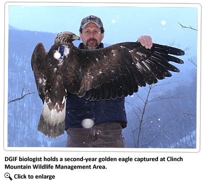 biologist-with-golden-eagle