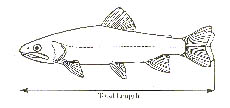 Certify a Trophy-Size Fish