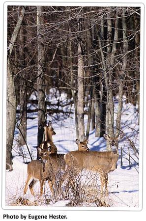 deer-in-the-snow