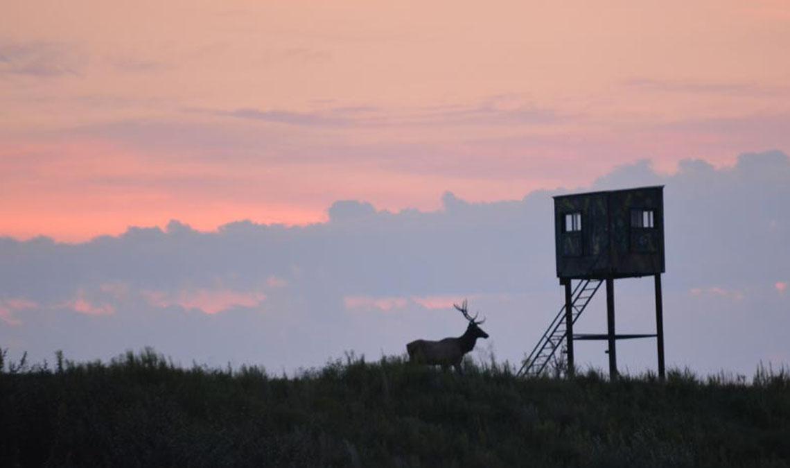 Watch the Elk Cam Live!