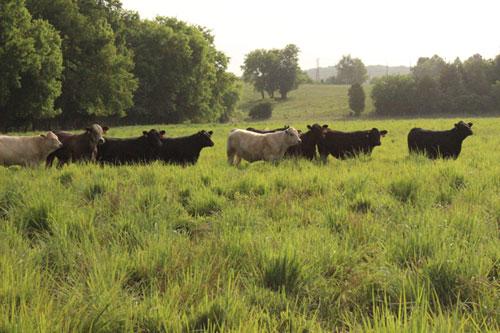 pasture-land-photo