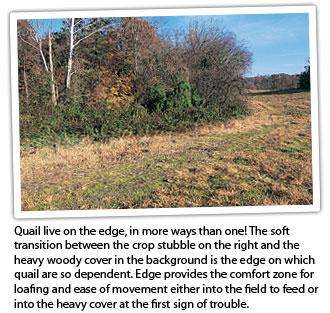 quail-edge
