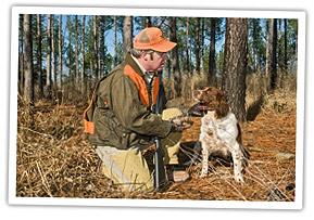 quail-hunting