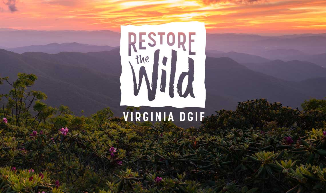 Join Us and Help Keep Virginia's Wild Places Wild