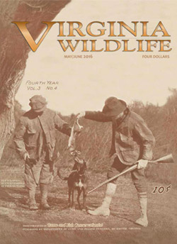 Virginia Wildlife 100th Anniversary Issue Cover