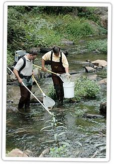 volunteer-fisheries-sampling